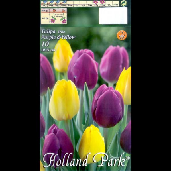 248397_03_duett-tulipan-viraghagyma-mix.png
