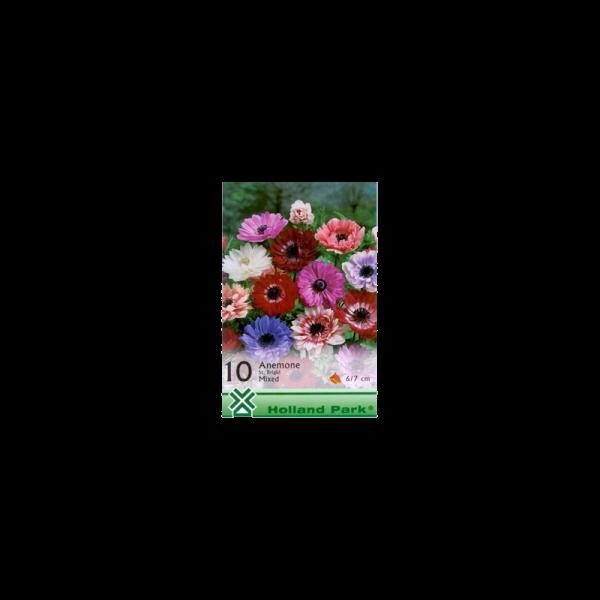 261948_01_vh-1-anemone-st-brigid-mixed.png