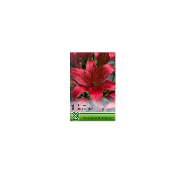 261995_01_vh-1-lilium-red-night-(asiatic-red).png