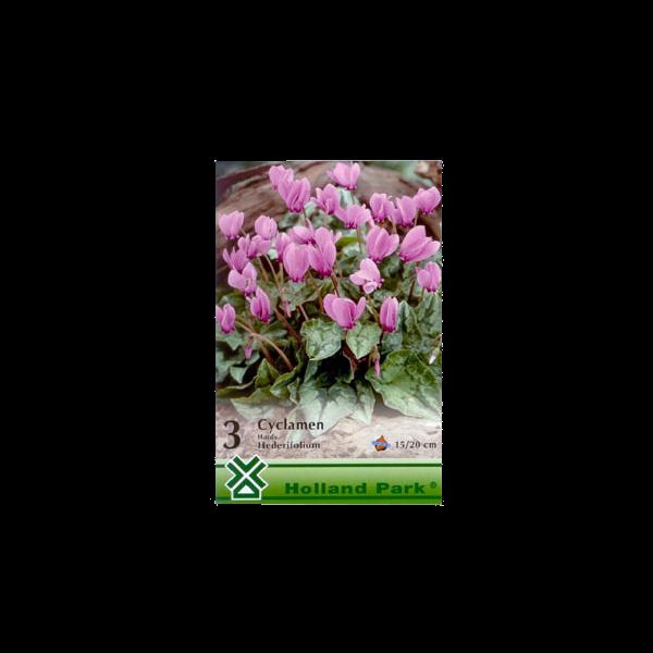 262059_01_vh-3-cyclamen-hardy-hederifolium.png