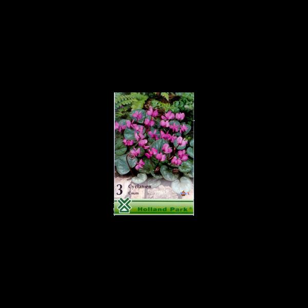 262060_01_vh-3-cyclamen-coum-i-(1-c-3-db).png