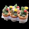 264112_02_kaktusz-tal-cs-13-cm-n-25-cm.png