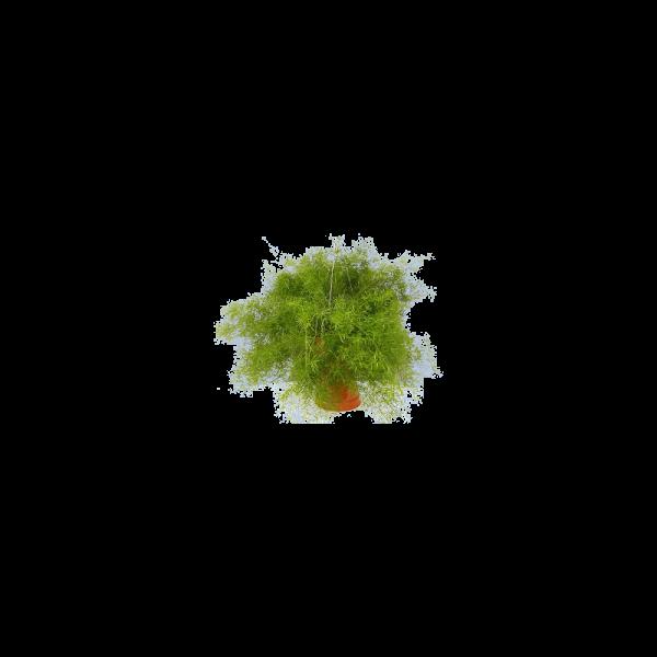 264306_01_asparagus-mix-cs12cm.png
