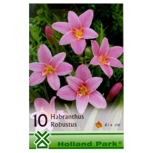 VH.1.HABRANTHUS ROBUSTUS