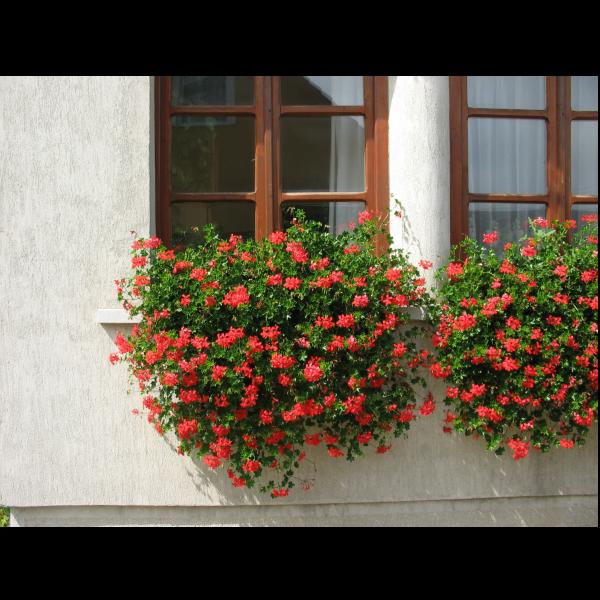 270851_02_muskatli-futo-tiroli-cs_12-cm-piros.png