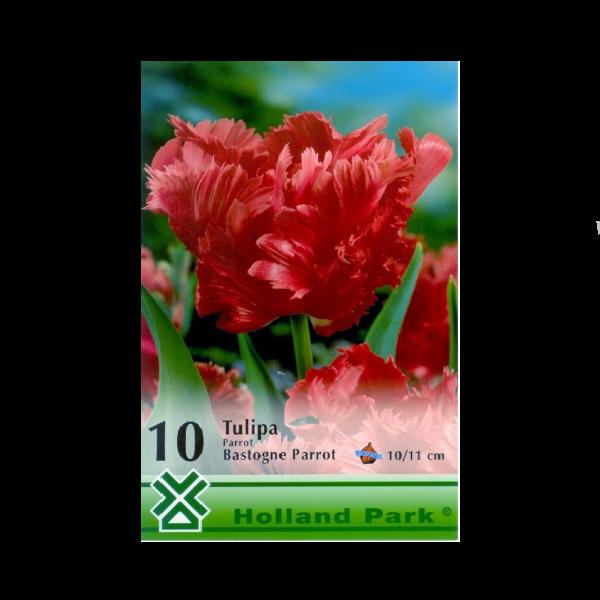 275425_01_vh-3-tulipan-bastogne-parrot.png
