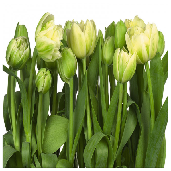 281140_02_fototapeta-jumbo14-imagine-tulips.png