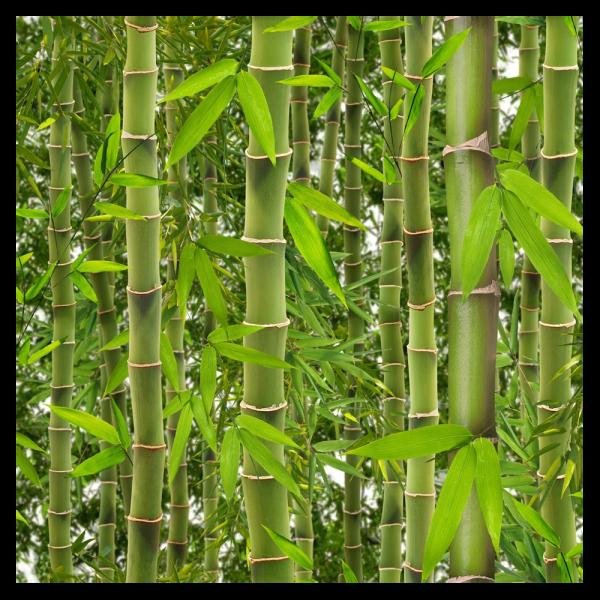 295195_01_habtapeta-bambusz-j41504.png