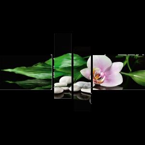 arti zen webshop