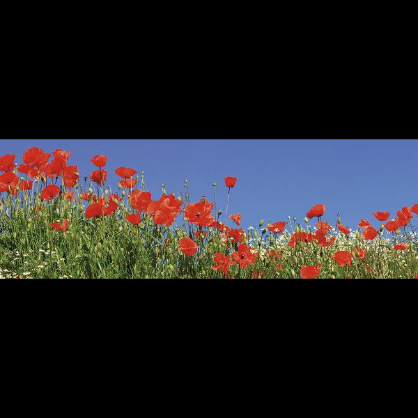 298567_01_vaszonkep-panorama-90x30cm-tavaszi-mezo.png