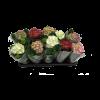 302183_01_hortenzia-mix-cs-10-5-cm-50-dbusor-300-dbucc.png.png
