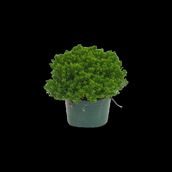 306176_01_hebe-emerald-gem-cs-11cm-n-22cm.png