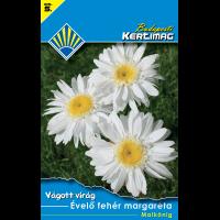 Vágott virág Évelő fehér margaréta Maik.